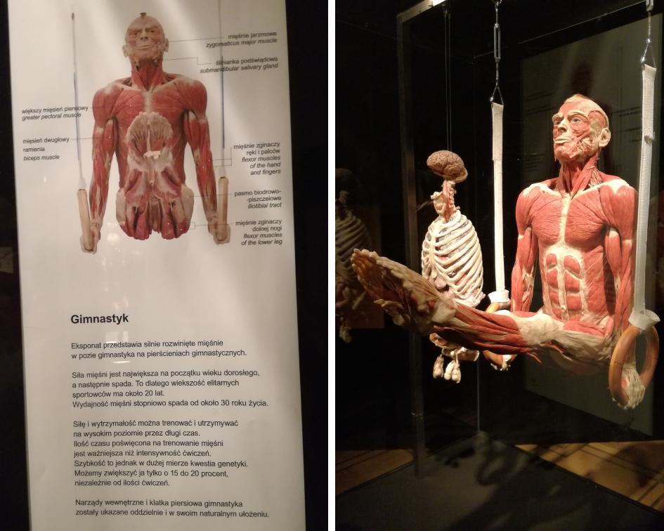 body worlds gimnastyk