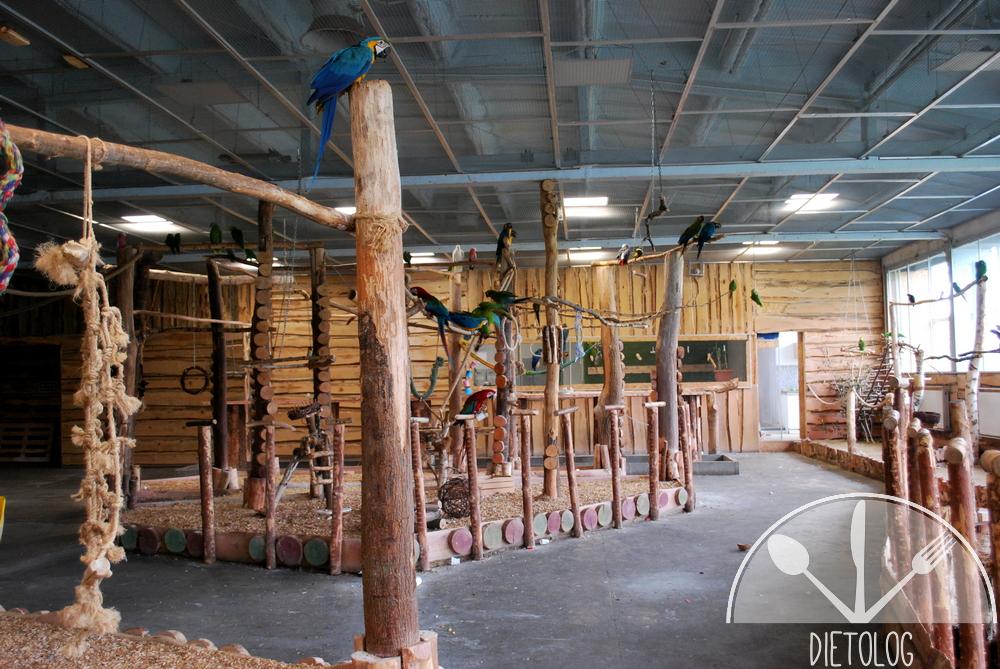 papugarnia garażowa 4