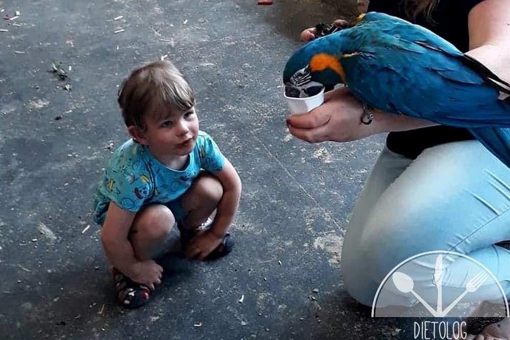 papuga i Tymek
