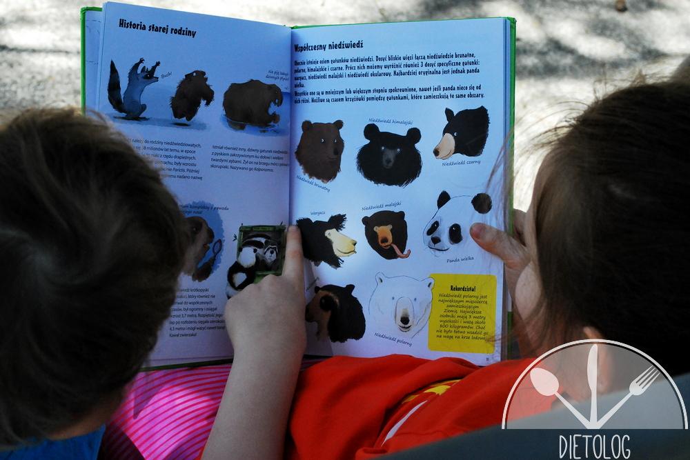 historia niedźwiedzi
