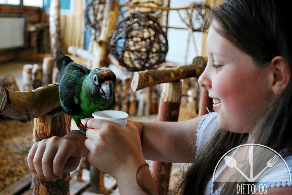 Milena karmi papugę