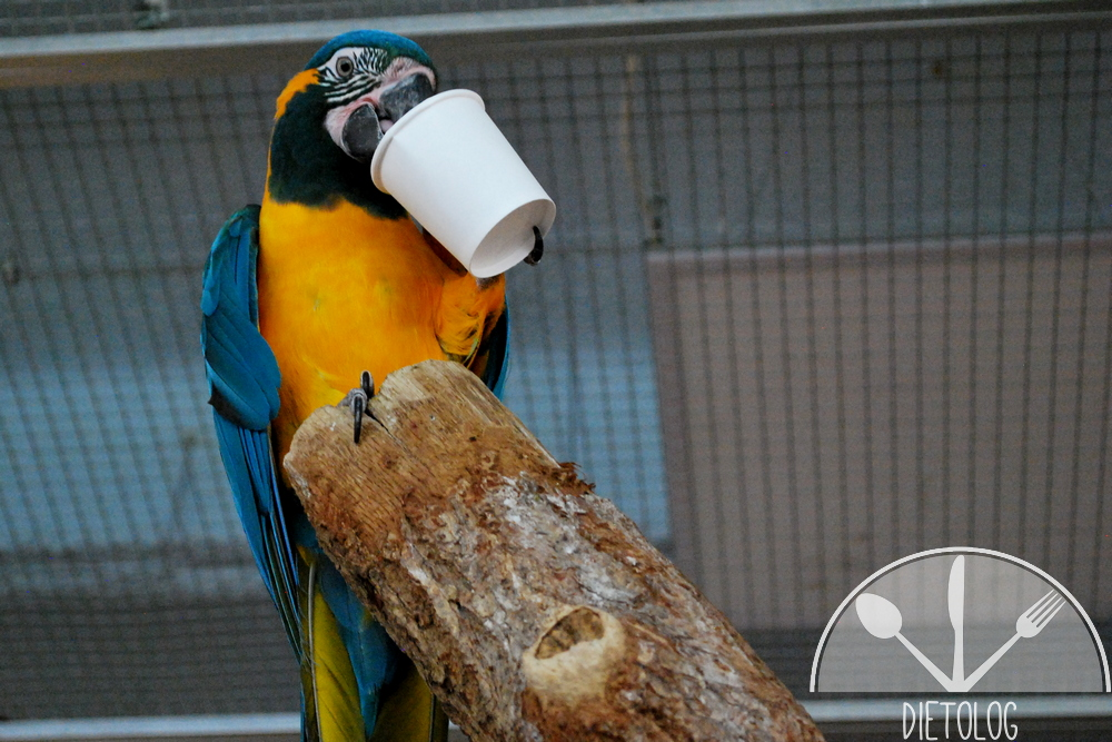 papuga je z kubeczka